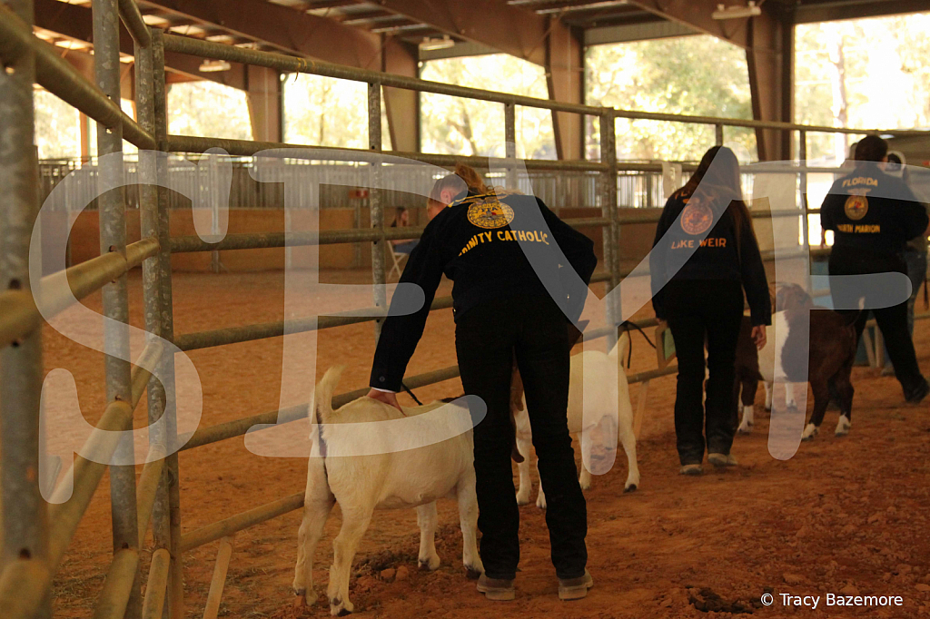 livestock5785