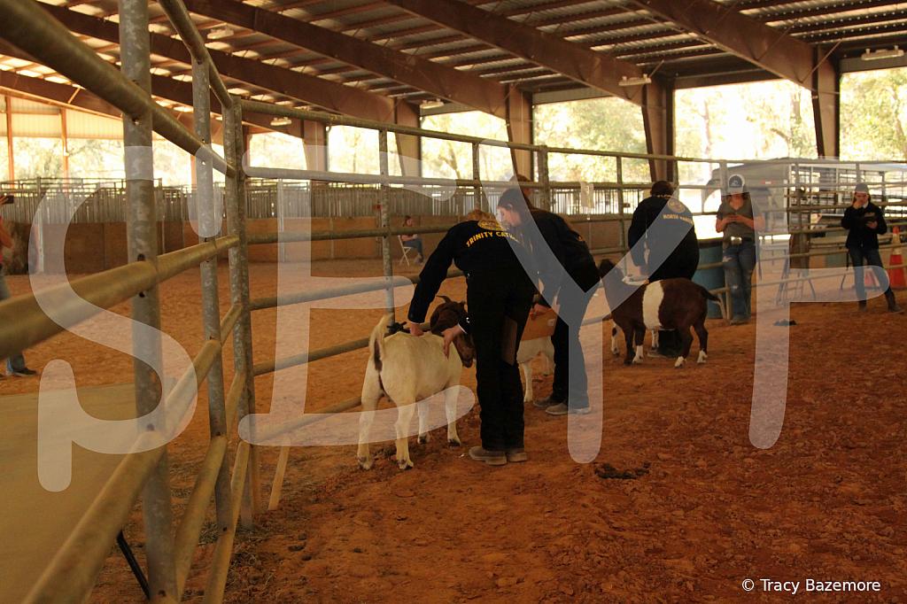 livestock5783