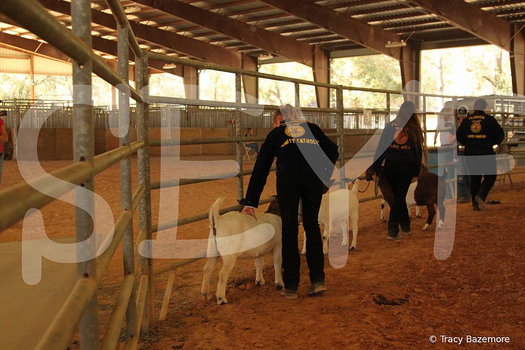livestock5786