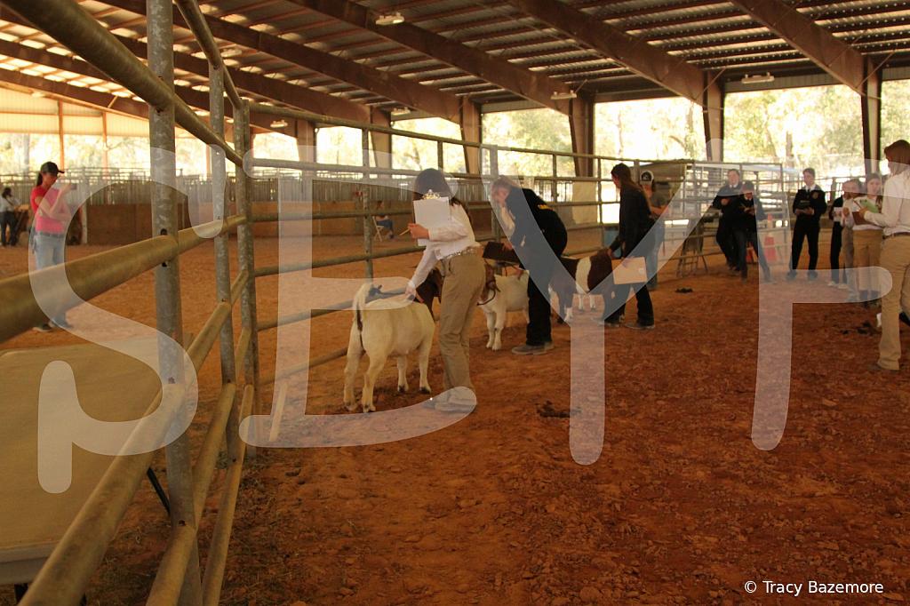 livestock5787