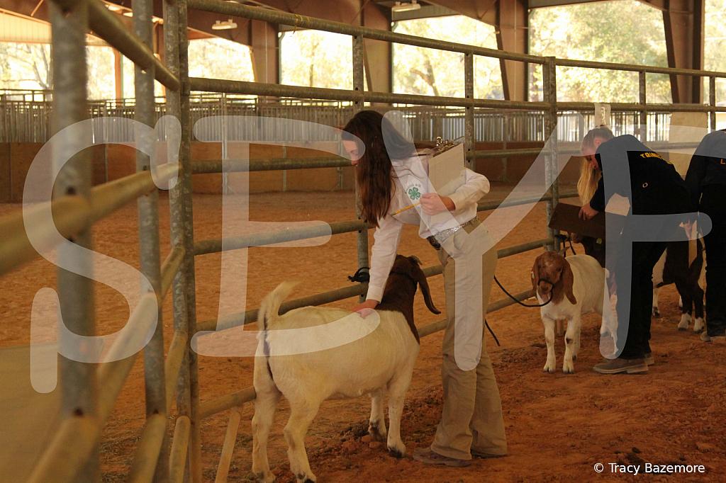 livestock5788