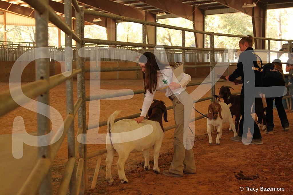 livestock5789
