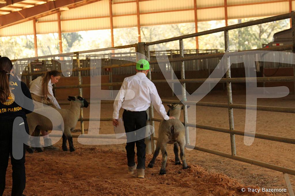 livestock5790