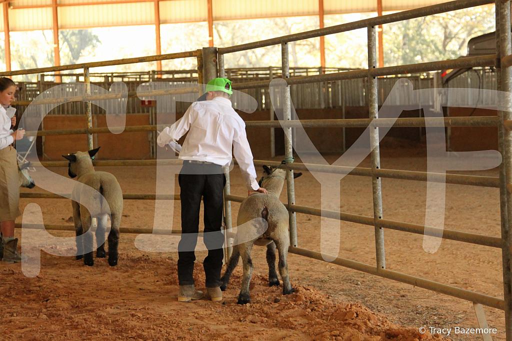 livestock5791