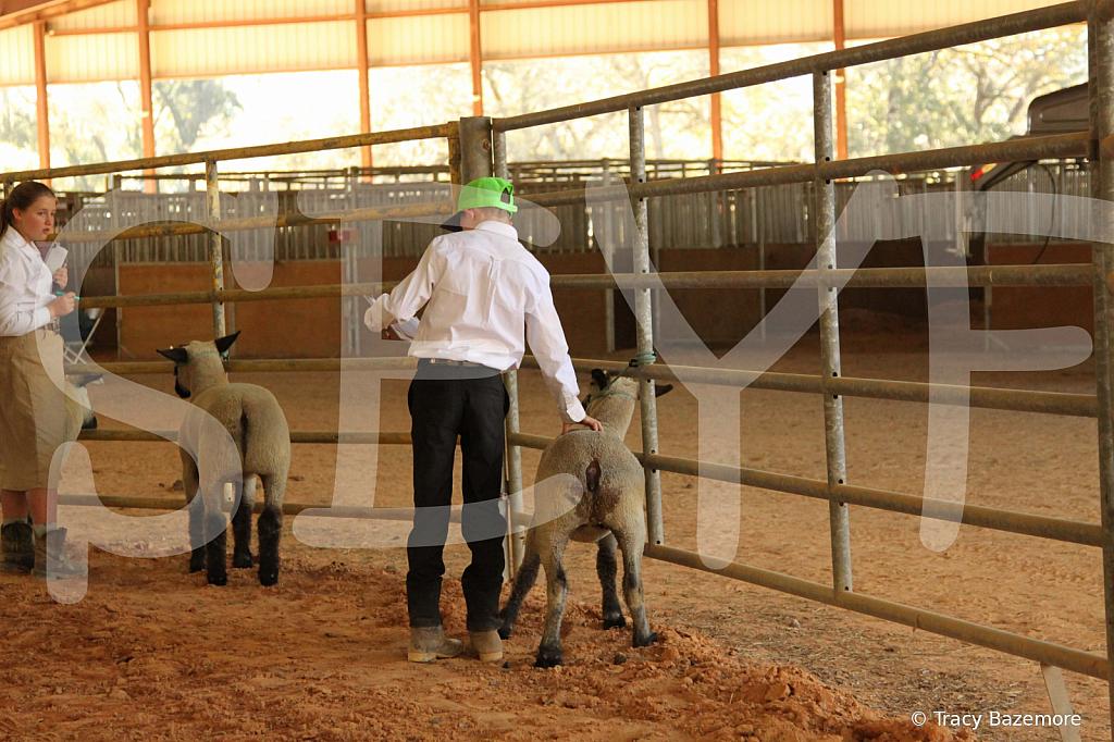 livestock5792