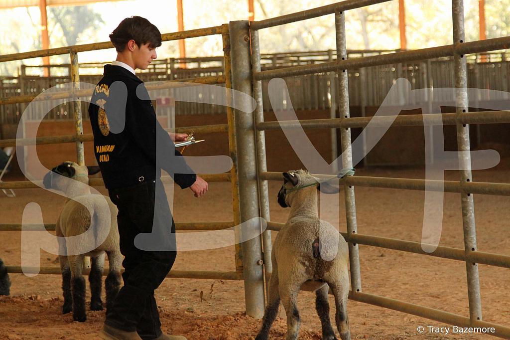 livestock5793