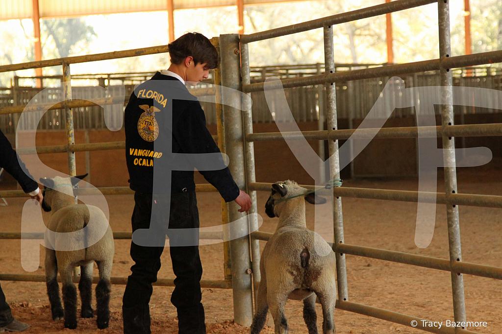 livestock5794
