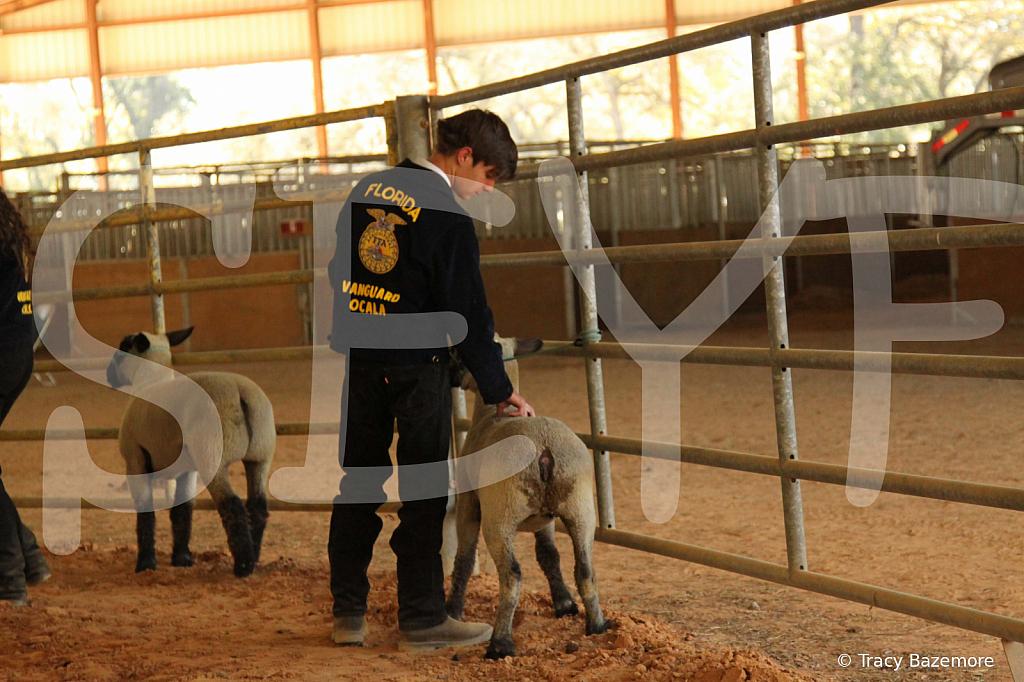 livestock5795