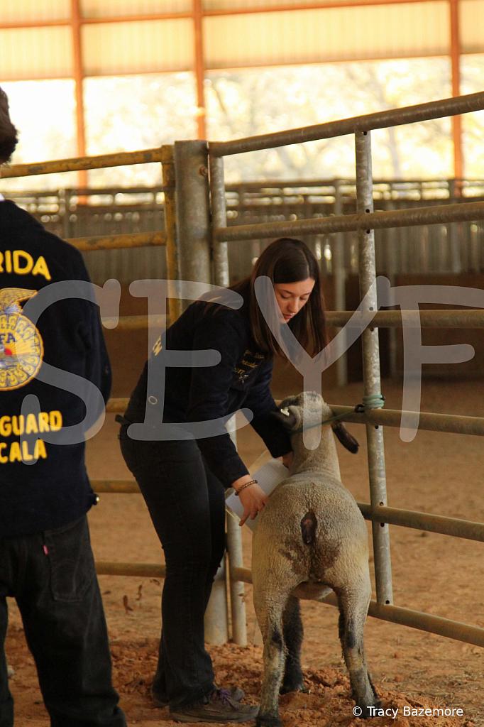 livestock5796
