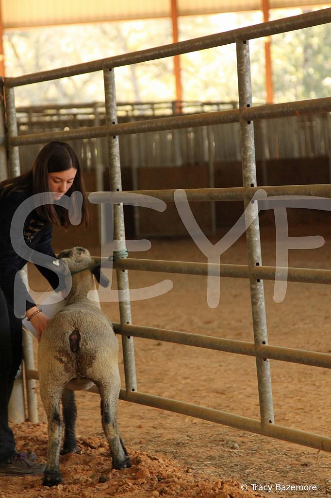livestock5797