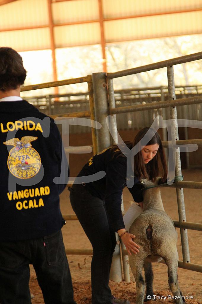 livestock5798