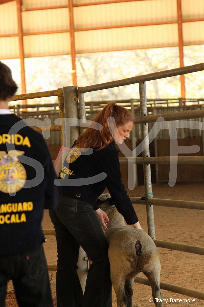 livestock5799
