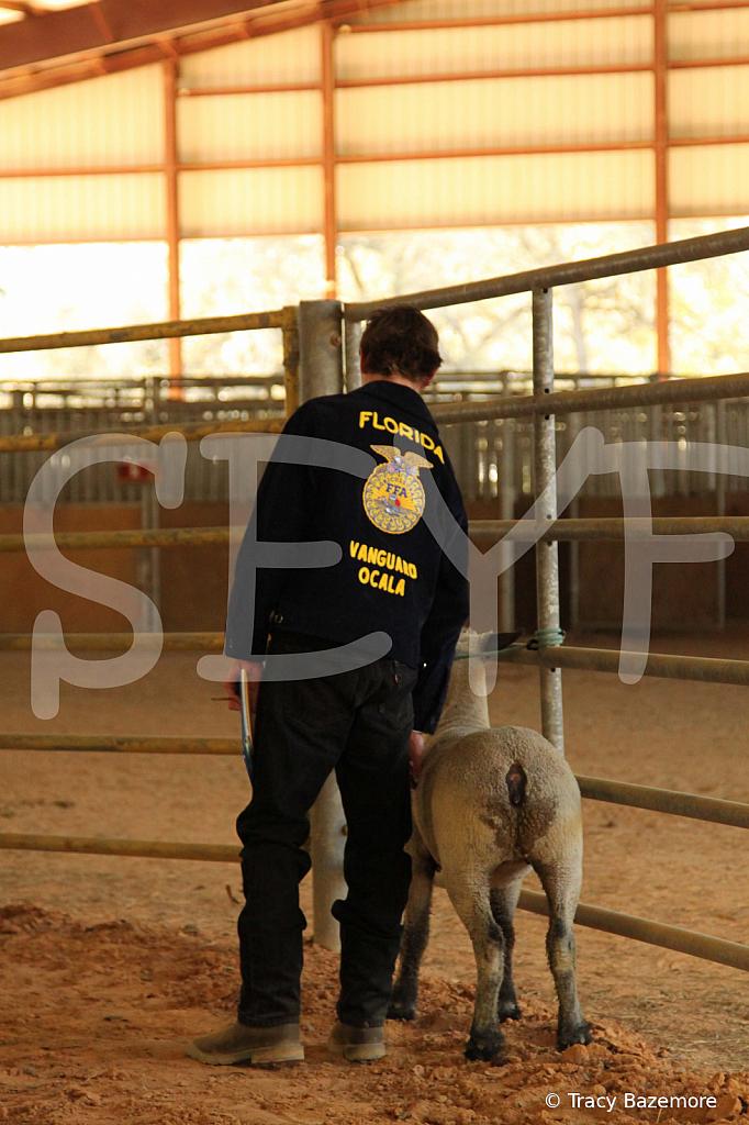 livestock5801