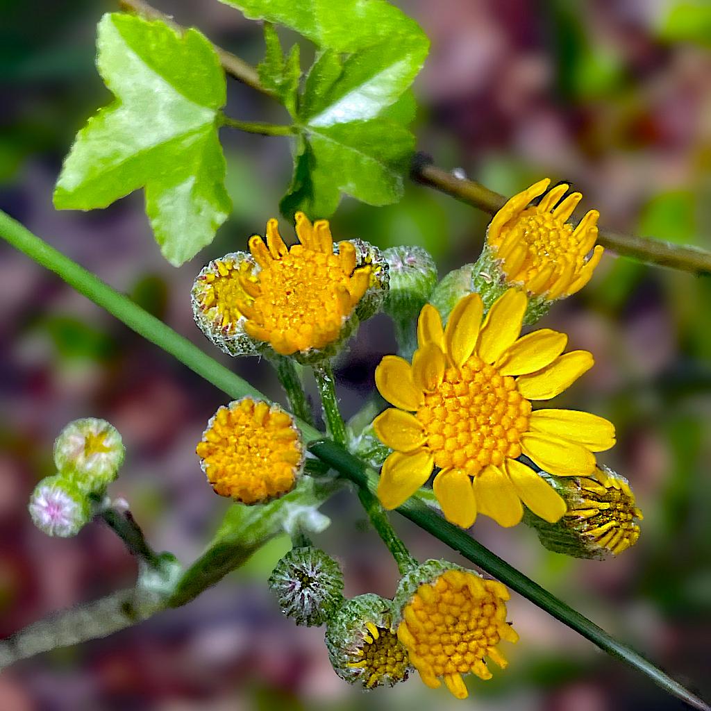 Wildflowers  2021 Photo Challenge (Day 14)
