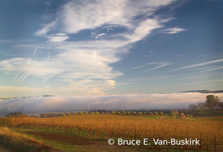 Low clouds fall vineyard