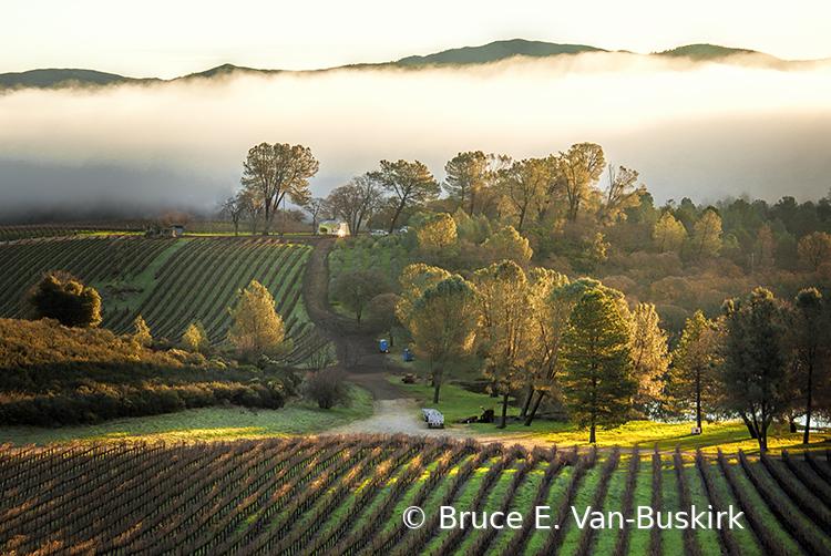Low cloud at Vigilant Vineyard