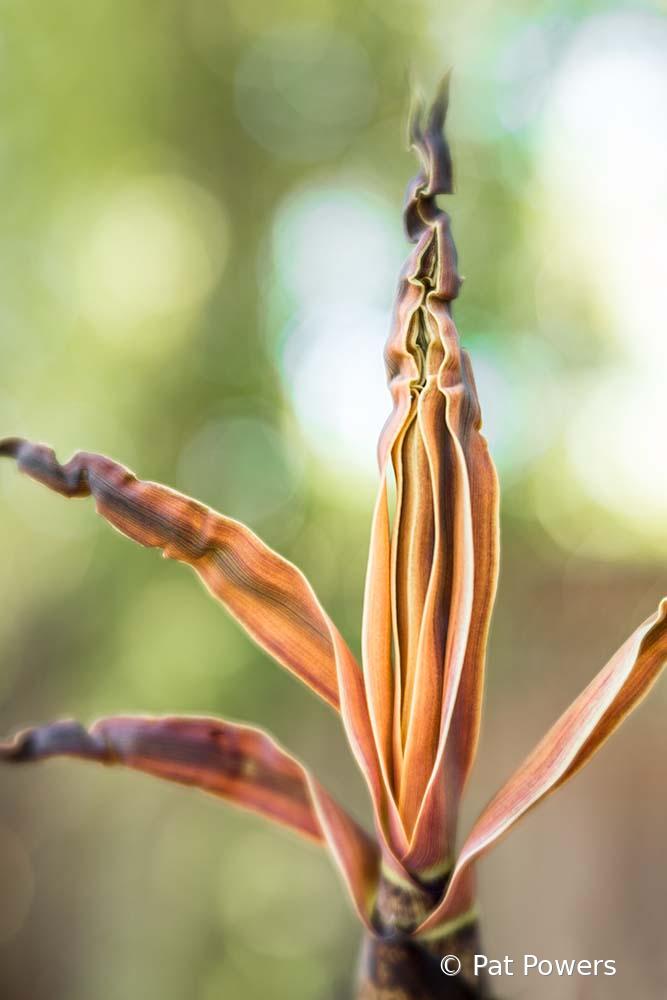 Blooming Bamboo