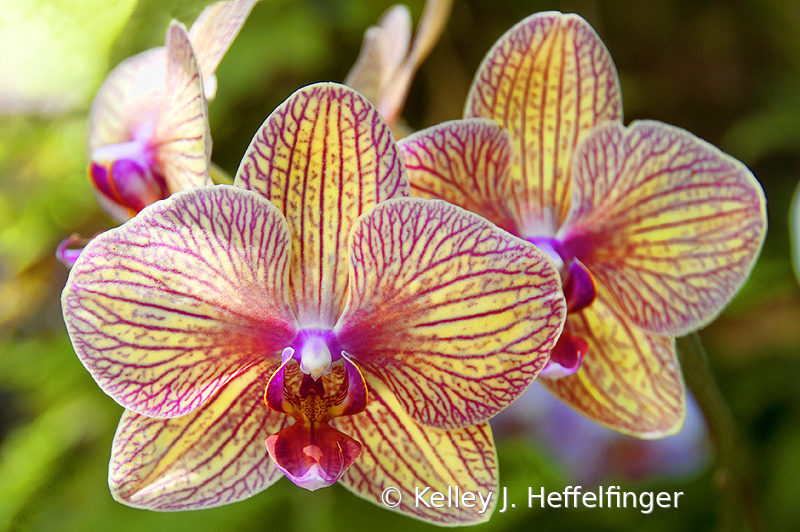 Orchids in the Morning