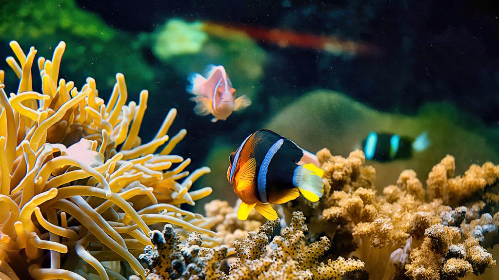 Anyone See Nemo?
