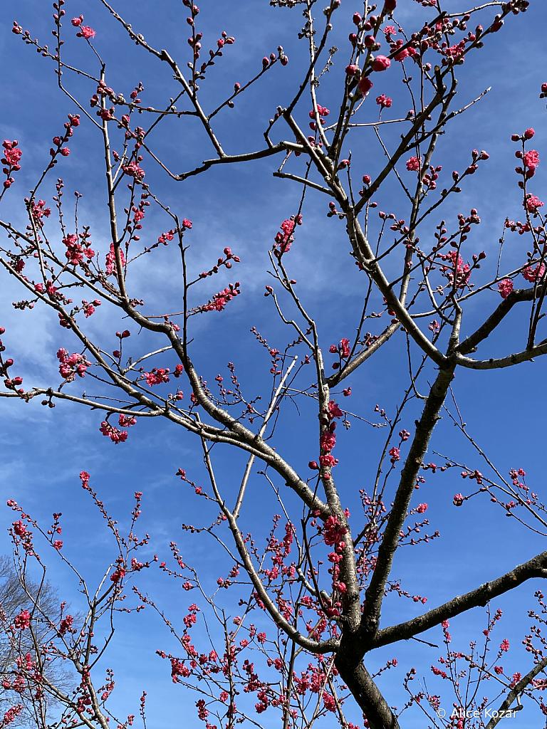 Its Spring  -  Awaken