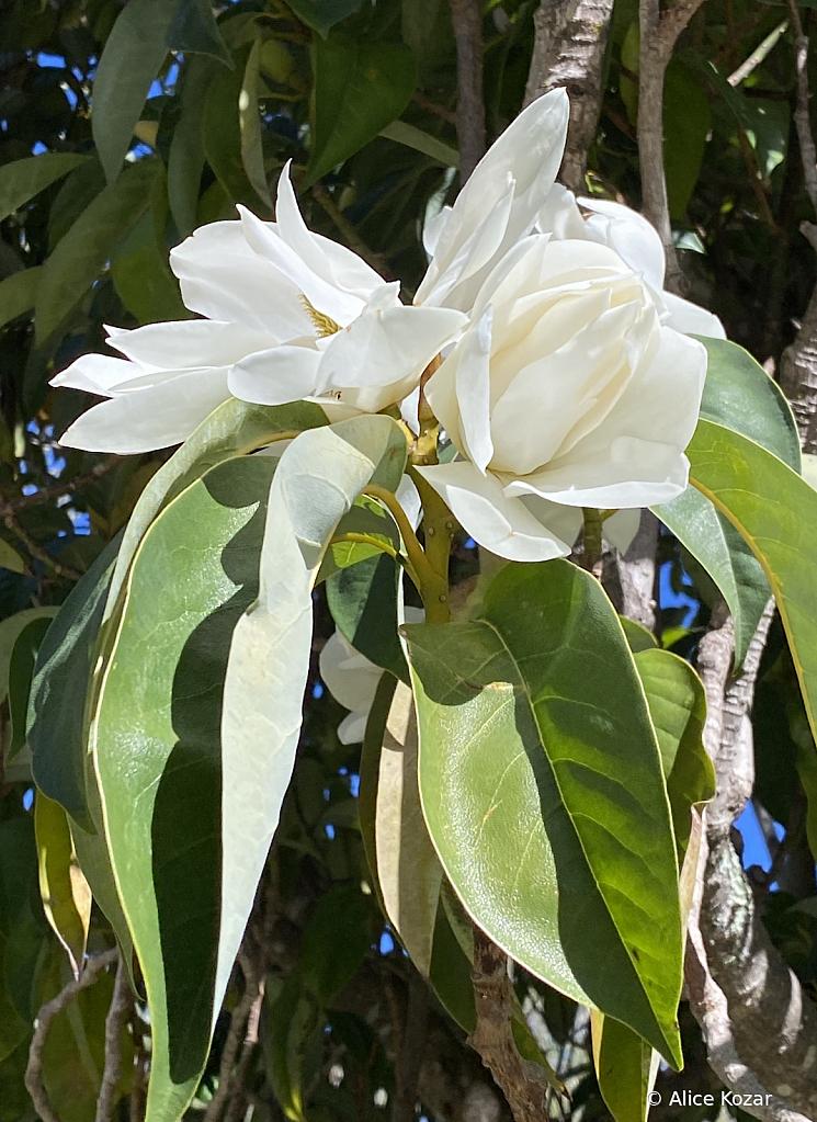 Nature's bridal bouquet