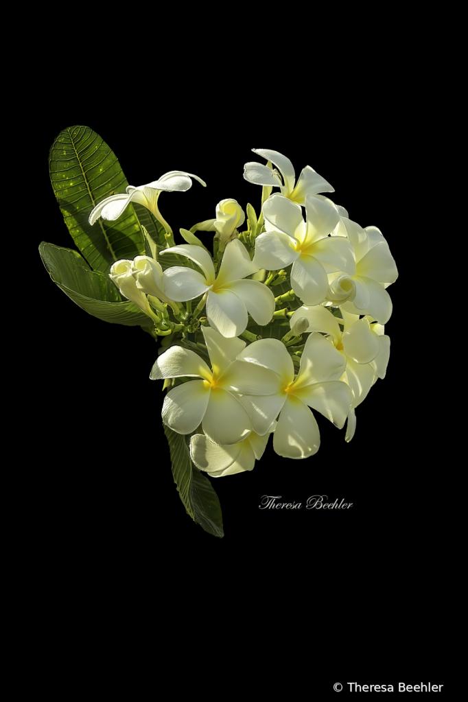 Opaque Flower