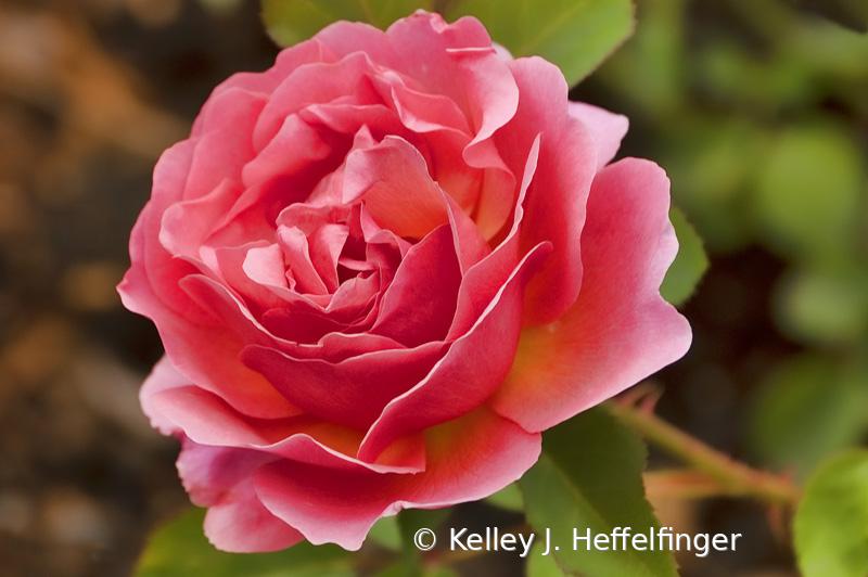 Full Bloom Friday