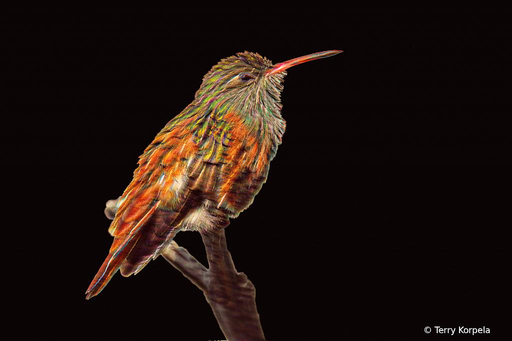Emerald Hummingbird Abstract