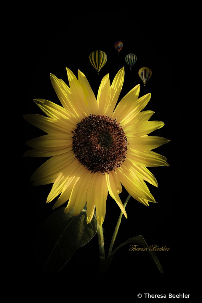 Sunflower at Balloon Festival