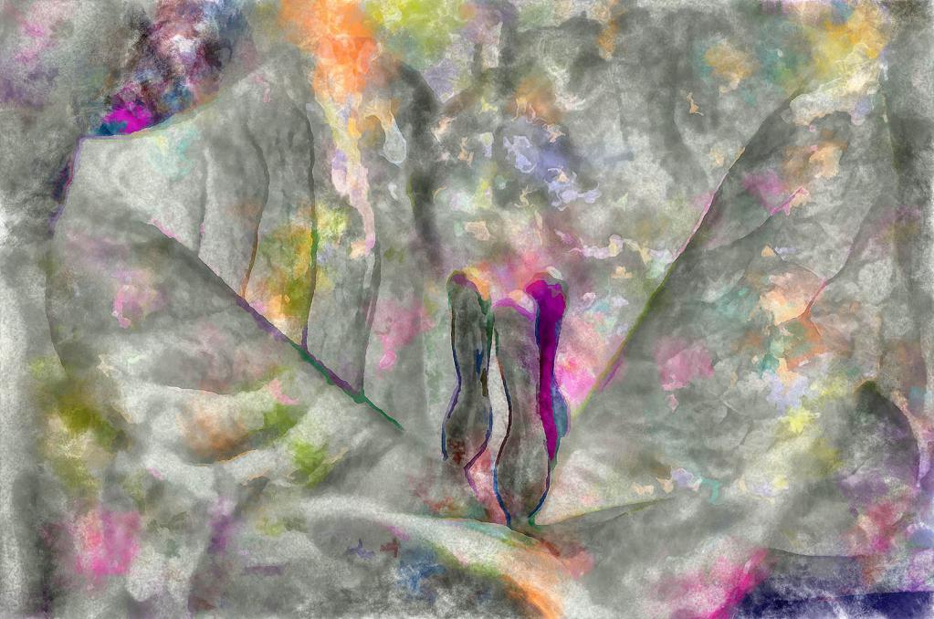 Dreams In a Floral Key