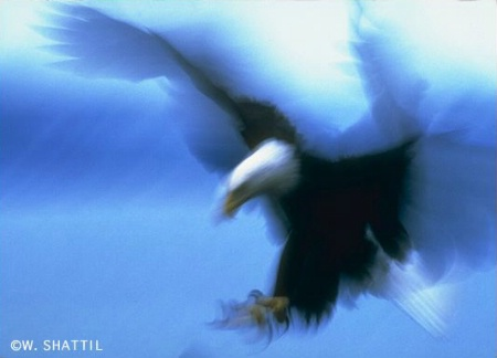 August 2000 Photo Contest Second Place Winner - Spirit Eagle