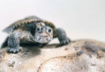 Harvey the Turtle