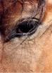 Gentle Eye