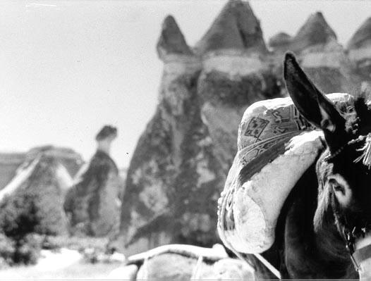 Turkish Donkey