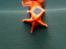 Photography Contest Grand Prize Winner - July 2002: Starfish Reflections