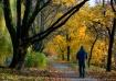 Fall morning walk