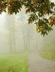 Seasonal Pathway