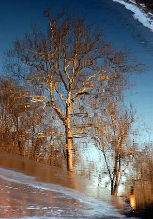 Reflecting On Winter.