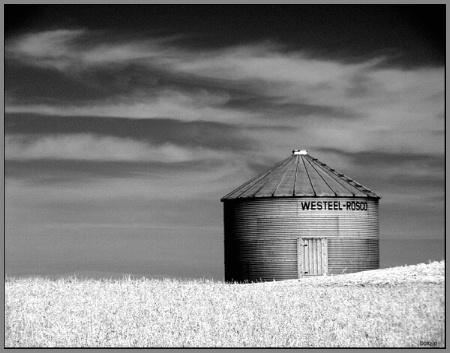 field of grain......