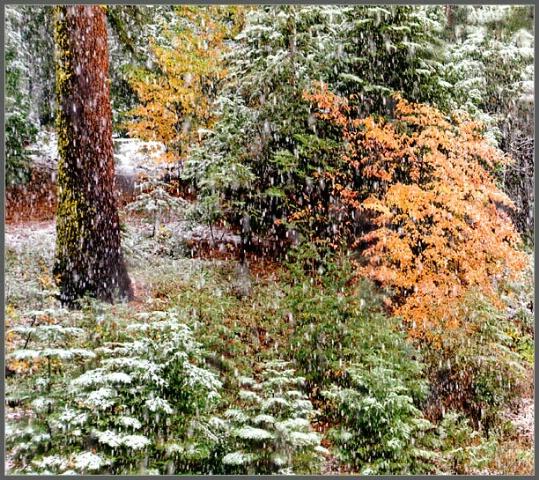 Snow Storm at Yosemite