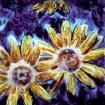 Yellow Daisys