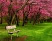 Sitting in Spring...