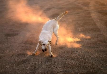 The Fire Dance Ritual
