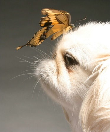 dog and buterfly