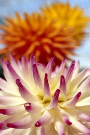 Flower Show-3