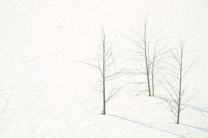 Snow Three Trees + 2