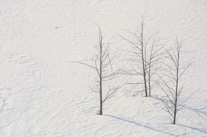 Snow Three Trees + 1
