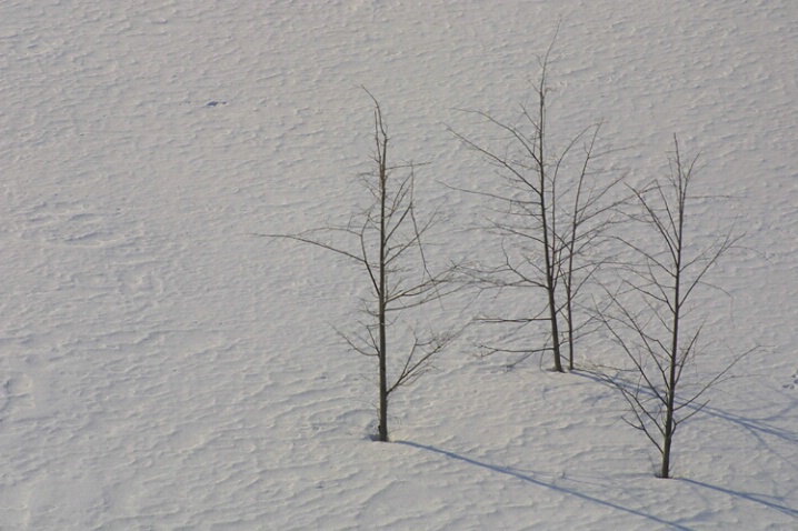Snow Three Trees