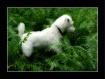 Great White Hunte...