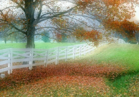 Shenandoah Fall